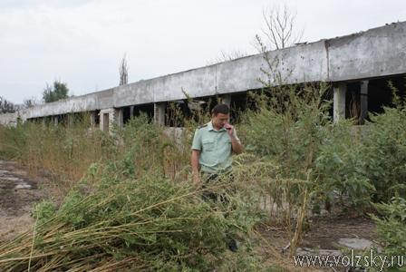 Более гектара конопли ликвидировано в Суходоле