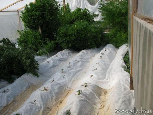 На даче в Волжском нашли 11 килограмм марихуаны
