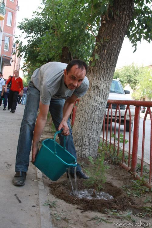 В Волжском деревья и кустарники высаживают добровольцы
