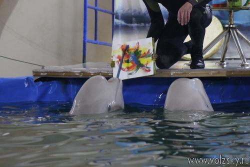 Волжские детдомовцы съездили в дельфинарий