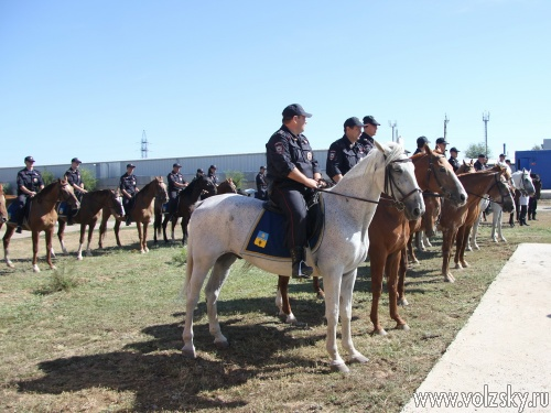 Волжским кавалеристам подарили коневозку