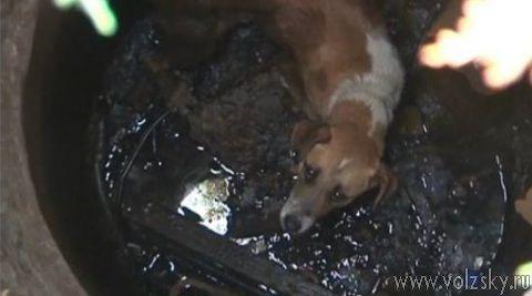В открытый люк провалилась собака