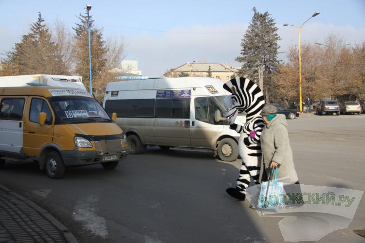 На помощь пешеходам в Волжском пришла зебра