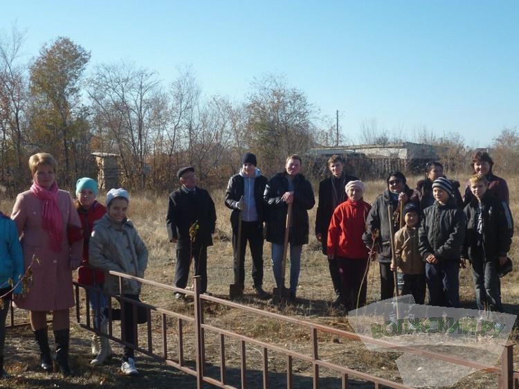 В поселке Краснооктябрьский высадили более 40 саженцев