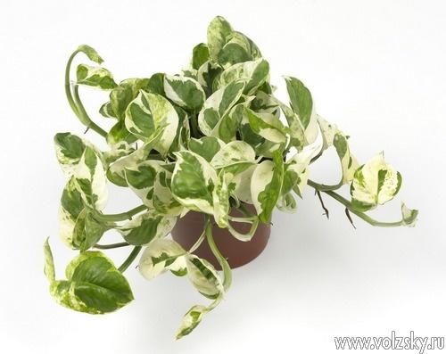 Волгоградский ботсад провёл экскурсию о растениях-«пылесосах»