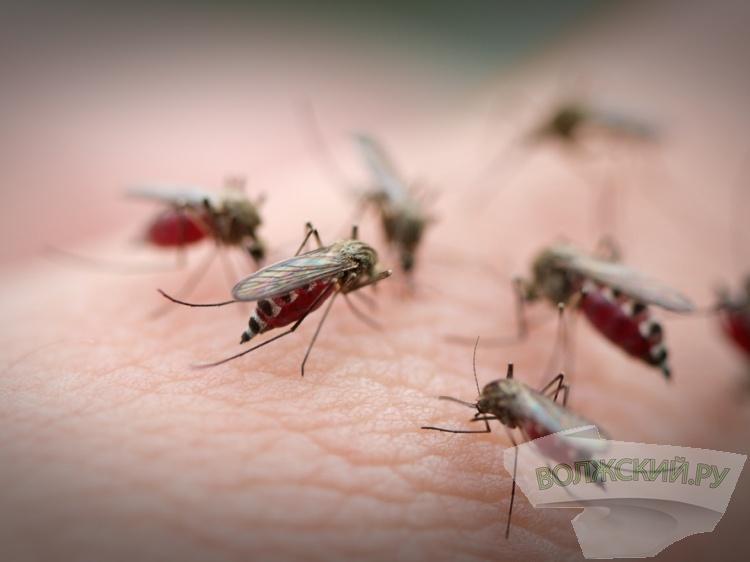 Ученые УрФУ выдумали изапатентовали препарат для лечения лихорадки Западного Нила