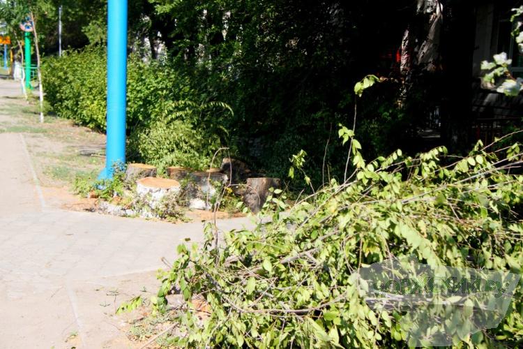 Вырубка деревьев на проспекте Ленина законна