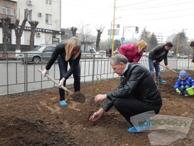 Сотрудники КСП украсили главную улицу Волжского «Сиренью Победы»