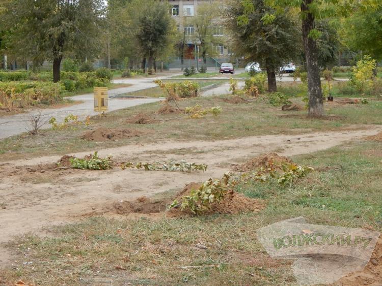 В Волжском восстанавливают зелёные насаждения