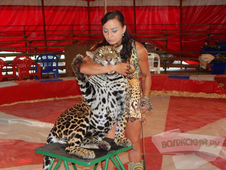 Волжане выбирают клички для новорожденных зверят в цирке-шапито