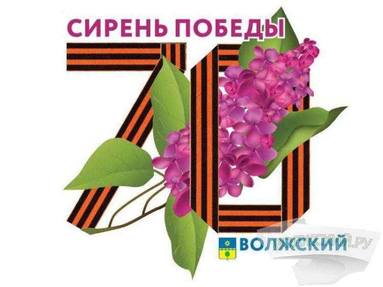 В Волжском стартует социальный проект «Cирень победы»