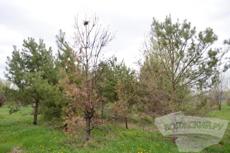 Трудно быть парком: опыт «Парка памятных дат»