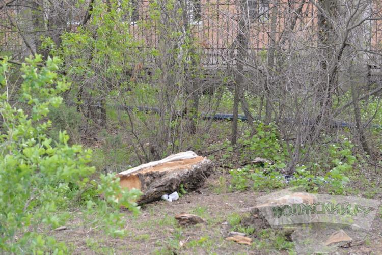 Что нового ждет волжан в городском парке?
