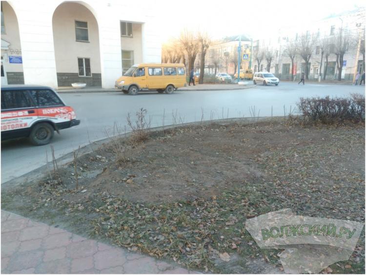 МБУ «Комбинат благоустройства» продолжает озеленять город Волжский