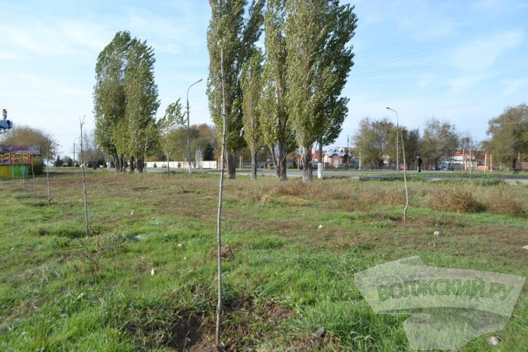 Парк «Волжский»: что изменилось за год?
