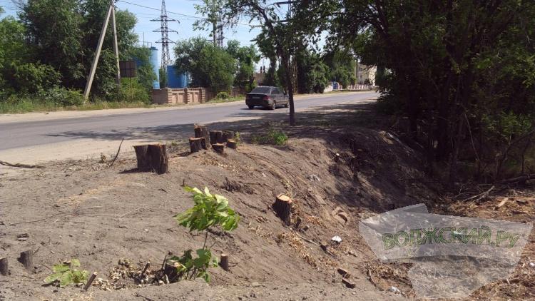 В Волжском незаконно вырубили десятки деревьев