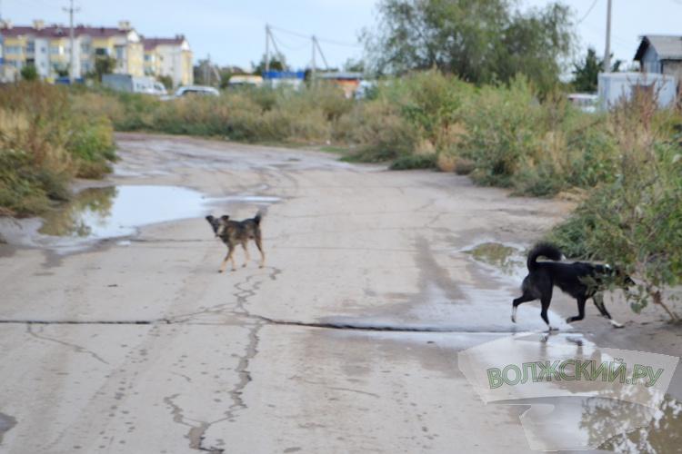 В Волжском отловят лишь 70 бродячих собак вместо 700?