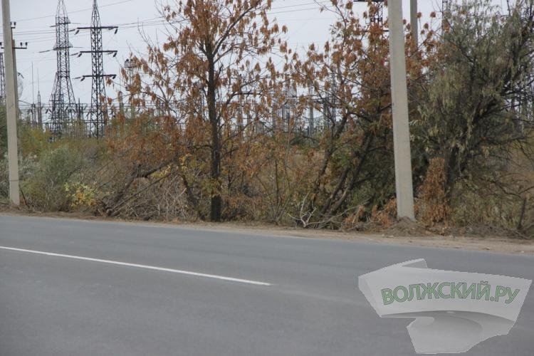В Волжском уничтожают деревья вдоль 6-й автодороги