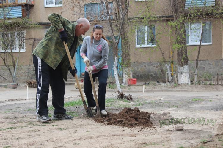 В Волжском завершилась акция по озеленению дворов