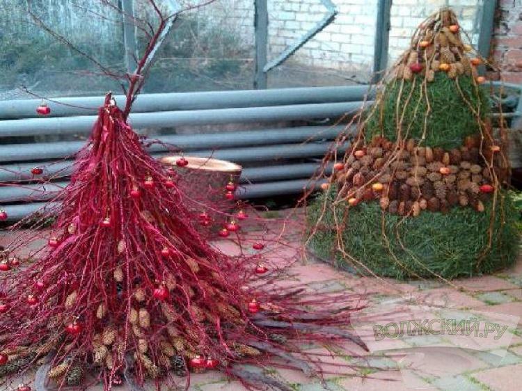 Граждане Волгограда сделают эко-селфи вботаническом саду