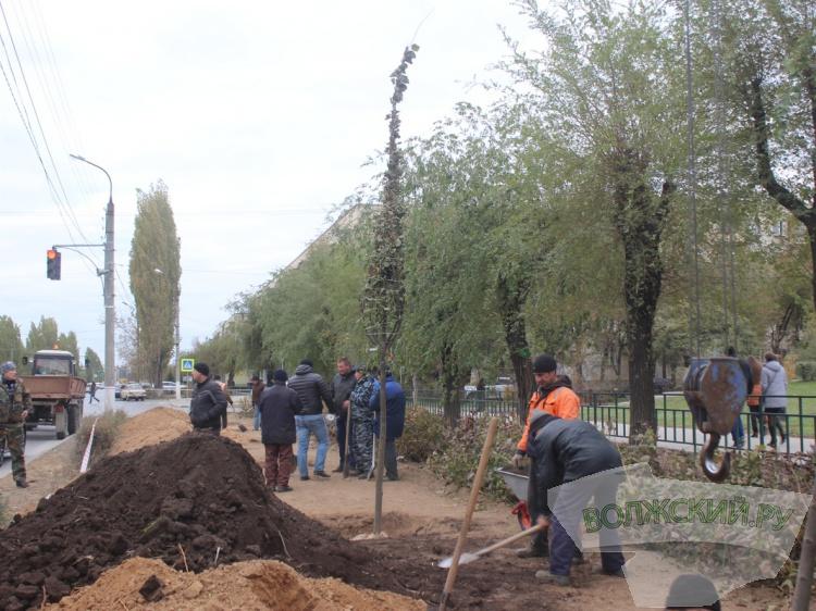 Высадка деревьев в Волжском проходит по новым правилам
