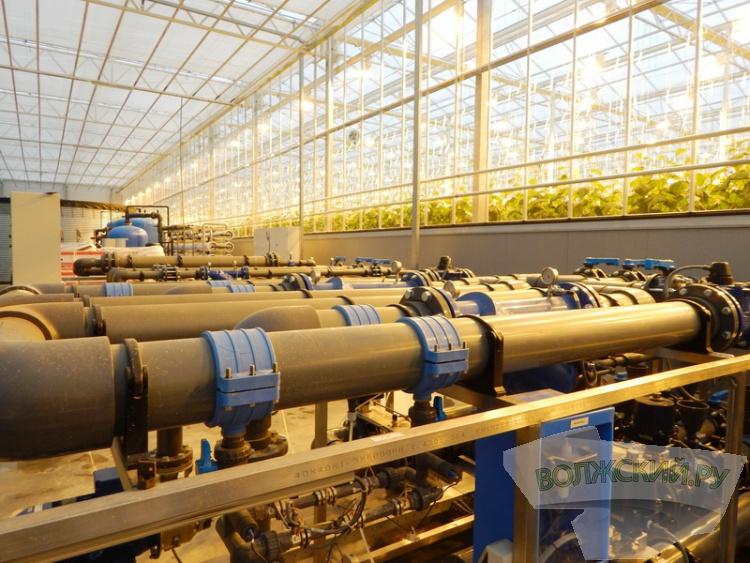 «БОТАНИКА» продолжает наращивать производственные мощности