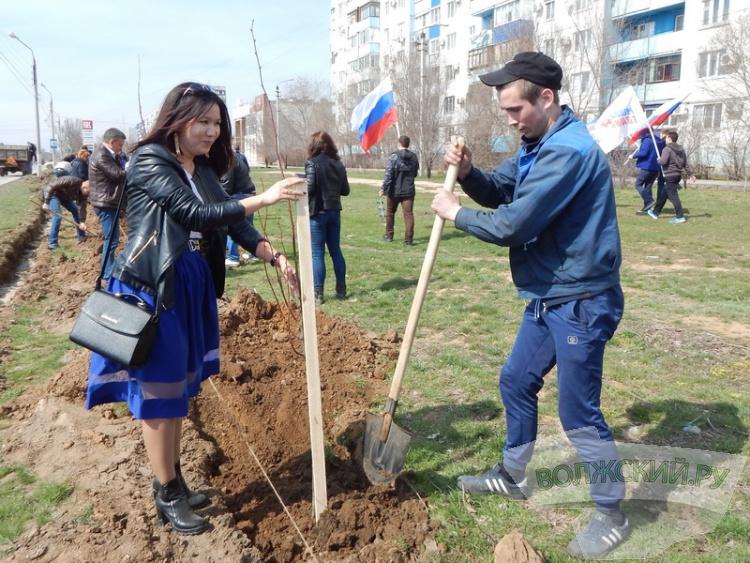 Активисты волжского отделения «Единой России» высадили липовую аллею