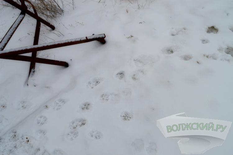 В Волжском отлов собак выходит из-под контроля
