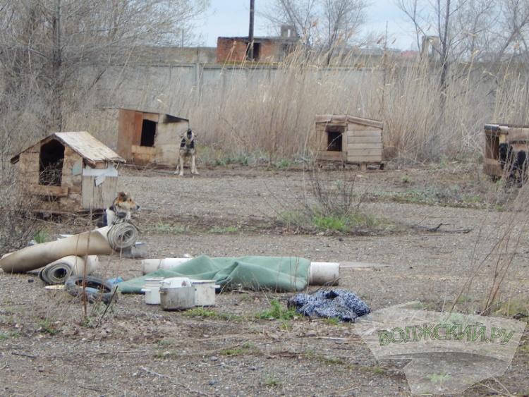 Приют для собак на Деревянном «переехал» на ЛПК