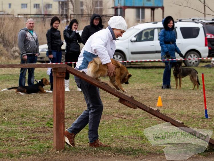 «Собаки в городе»: отлов, приют или культура хозяина?