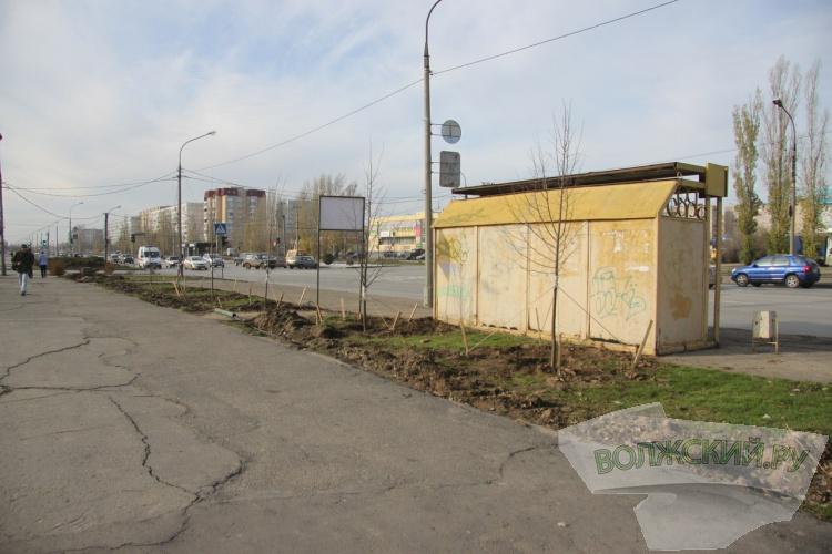 Вдоль Александрова высадили уже 235 лип