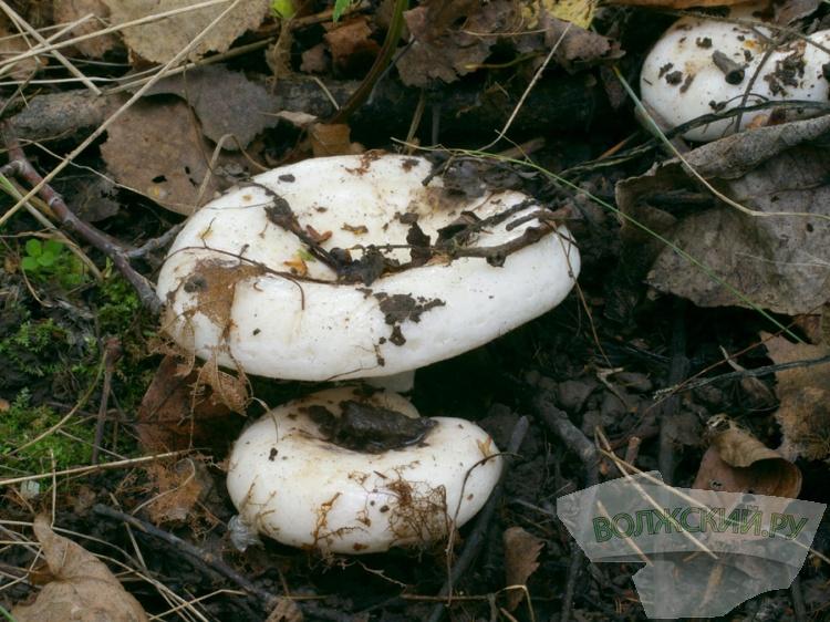 Два человека отравились грибами вНижегородской области