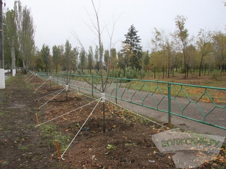 В Волжском обновляют зеленые насаждения