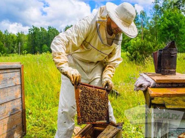 В регионе начнут развивать пчеловодство - Волжский.ру