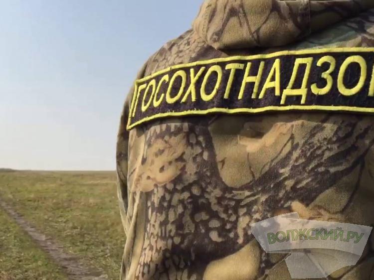 В регионе охотники злостно отстреливают пернатых 188.244.133.246