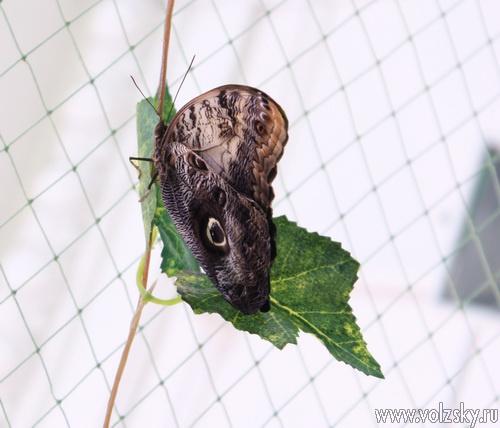 В Волжском открылась выставка живых бабочек