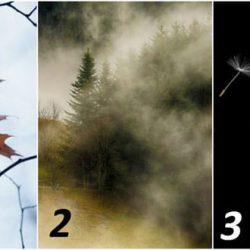 Какая картинка из трёх сразу же привлекла ваше внимание? Ваш выбор укажет на то, на чём вам следует сосредоточить свои усилия